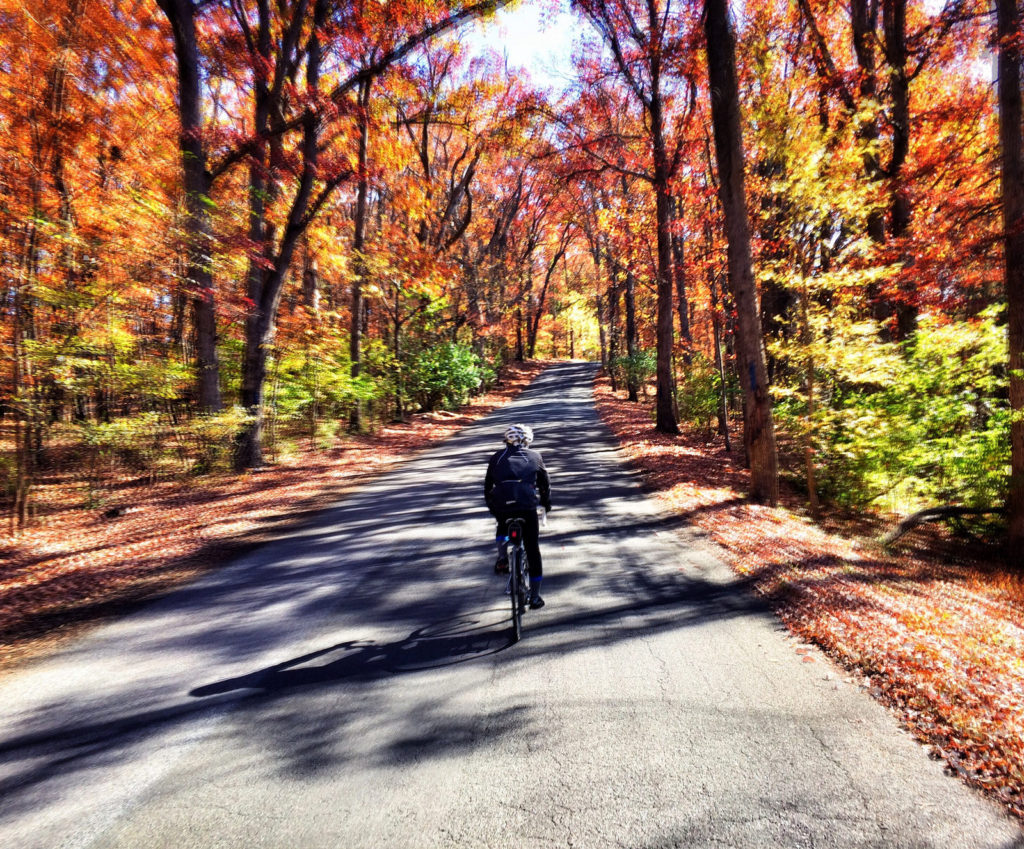 Coffeeneuring during foliage season
