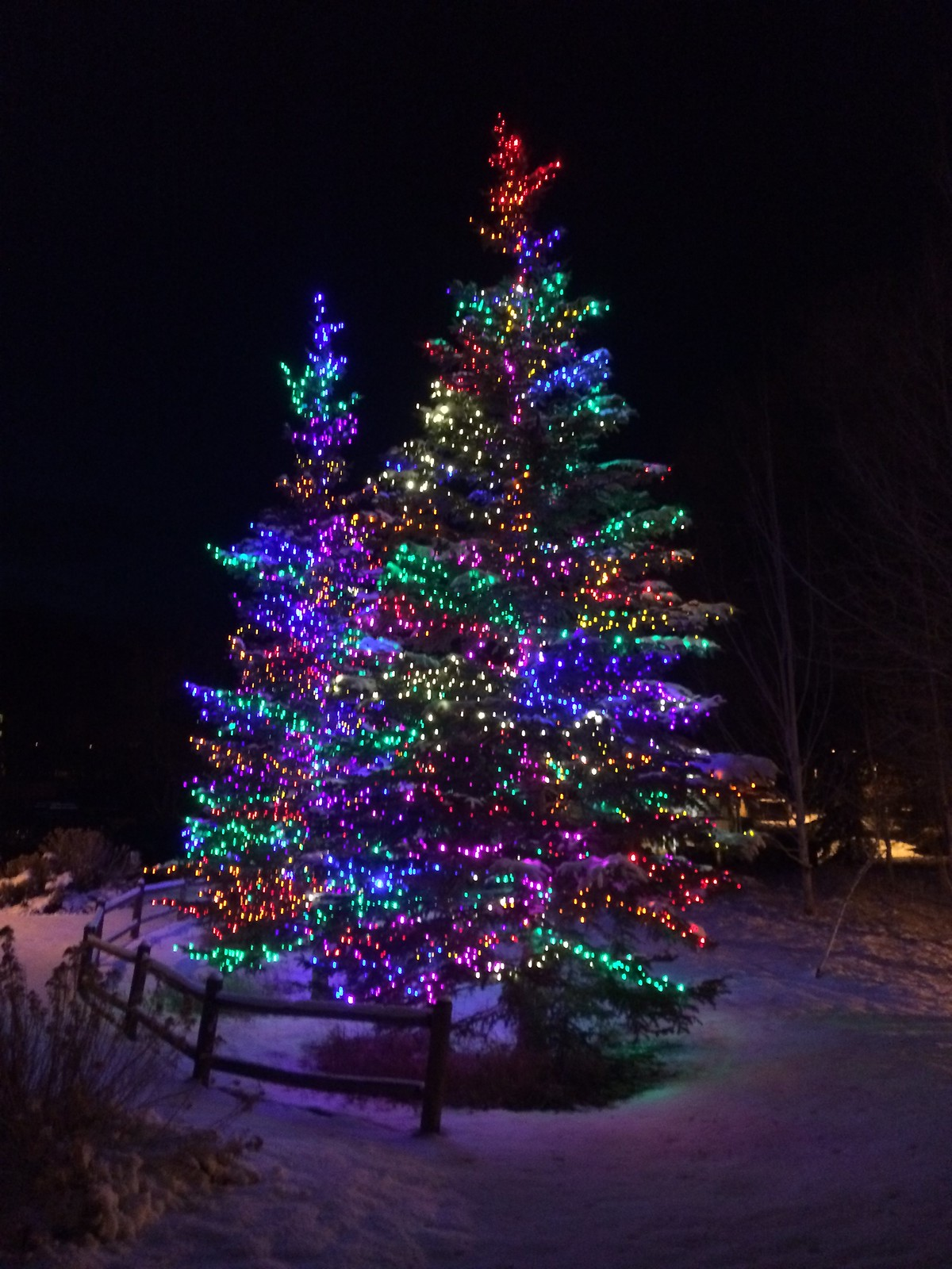 Christmas trees in Park City