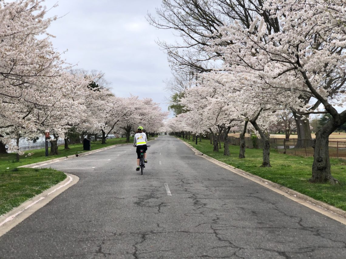 Hains Point during cherry blossom season 2021